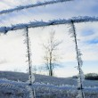 Stock Photo: Frosty Fence