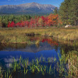 Stock Photo: Autumn Maple Trees In Bog, Mount Katahdin, Baxter State Park