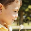 Boy With Dandelion — Stock Photo #31683491