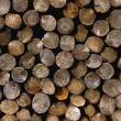 Logs In Orderly Pile — Stock Photo #31683549