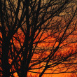 Deciduous Tree At Sunrise — Stock Photo #31683655