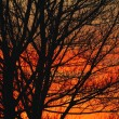 Deciduous Tree At Sunrise — Stock Photo