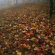 Fallen Autumn Leaves, Forest In Mist, Great Smoky Mountain National Park — Стоковое фото