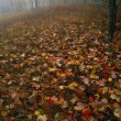 Fallen Autumn Leaves, Forest In Mist, Great Smoky Mountain National Park — Stok fotoğraf
