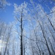 Frost On Trees In Forest — Stock Photo
