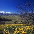 Stock Photo: Blooming Yellow Flowers, Leafless Tree, Distant Green Meadow, Hood River Valley, Distant Mount Hood.