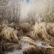 Closeup Of Frosty Grass — Stock Photo #31684431