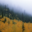 Autumn Colors In Mountain Fog — Stock Photo