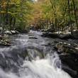 Stock Photo: Woodland River