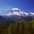 Mount Rainier, Mount Rainier National Park — Stock Photo #31685737