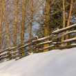 Split Rail Fence In Winter — Stock Photo #31686181