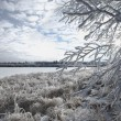 Stock Photo: Winter Scenic