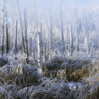 Stock Photo: Frosty Winter Scene