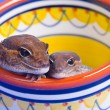 Stock Photo: Pair Of Critters
