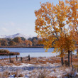 Autumn Tree By A River — Stock Photo #31686687