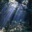 Stock Photo: Sun Beams Through Fog And Forest Trees