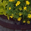 Yellow Flowers In A Planter — Stock Photo #31686991