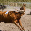 Steer Wrestling — Stock Photo #31687109