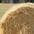 Hay Bale — Stock Photo #31687291