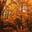 Stock Photo: A Vibrant Forest In The Fall