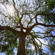 Stock Photo: Low-Angle Of Tree