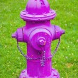 A Bright Pink Fire Hydrant — Stock Photo #31687903
