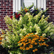 Foto de Stock  : Flowering Plants Against Window Set In Brick Wall