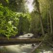 A Rushing River In A Forest — Stock Photo