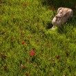 Stock Photo: A Rabbit In The Grass