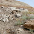 Rocky Slope — Stock Photo #31688721