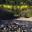 Autumn Aspens Along Cottonwood Creek, San Isabel National Forest — Stock Photo