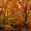 Stock Photo: Fall Leaves On Trees