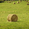 Stock Photo: Bales Of Hay In A Field