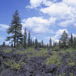 Lava Beds In Forest Clearing — Stock Photo