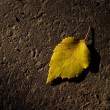 Closeup Of Autumn Leaf — Stock Photo