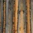 Texture Of Wood — Foto de Stock