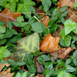 Foto de Stock  : Greenery And Dried Leaves Together