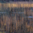 Autumn Grasses And Reflection In Pond — Stock Photo #31689917