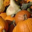 Pumpkin Display — Stock Photo #31689923