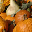 Stock Photo: Pumpkin Display