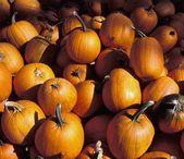 Closeup Of Pumpkins — Stock Photo