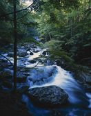 Stream In Motion, Boulders, Forest Trees, Late Summer, Tremont, Great Smoky Mountains National Park — Stock Photo