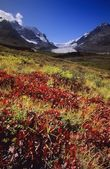 Columbia Icefields, Banff National Park — Stock Photo