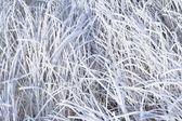 Hoarfrost On Grass — Stock Photo