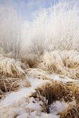 Frosty Grass — Stock Photo