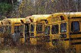 Abandoned School Buses — Foto de Stock