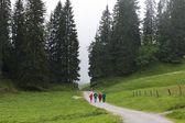Alpine Hikers Walk Down Mountain Path — Stock Photo