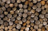 Logs In An Orderly Pile — Stock Photo
