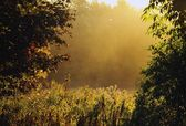Fog And Foliage — Stock Photo