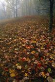 Fallen Autumn Leaves, Forest In Mist, Great Smoky Mountain National Park — Stock Photo